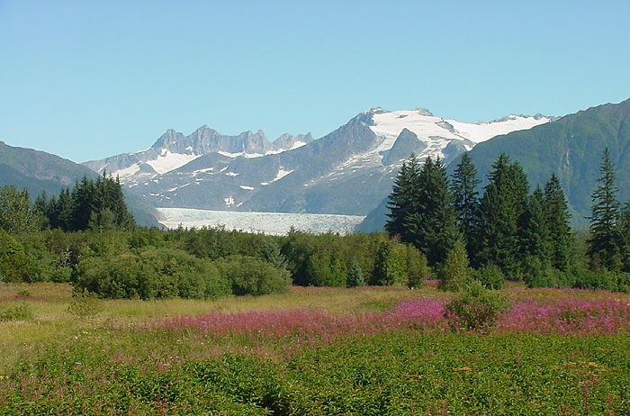 Mendenhall Glacier from Brotherhood Park.