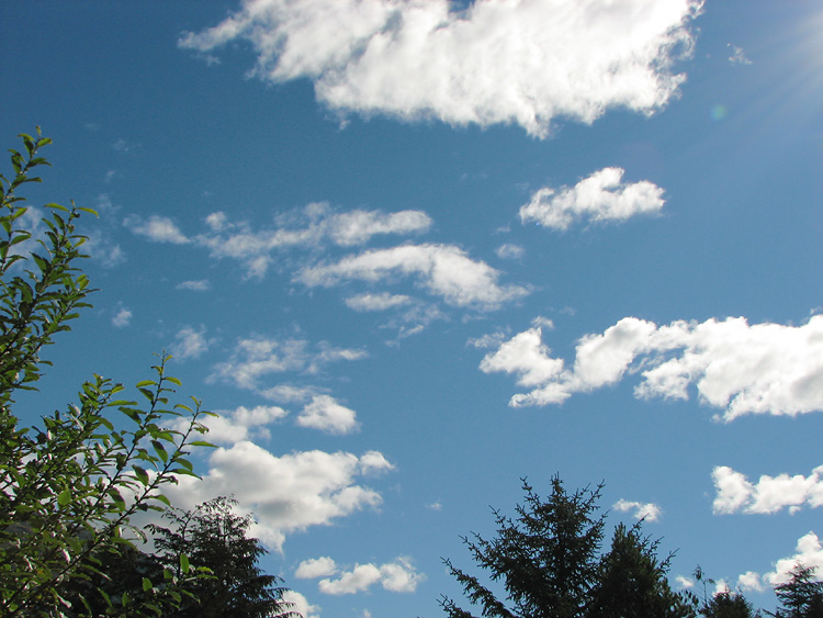Blue Sky, White Clouds, and Green Trees.