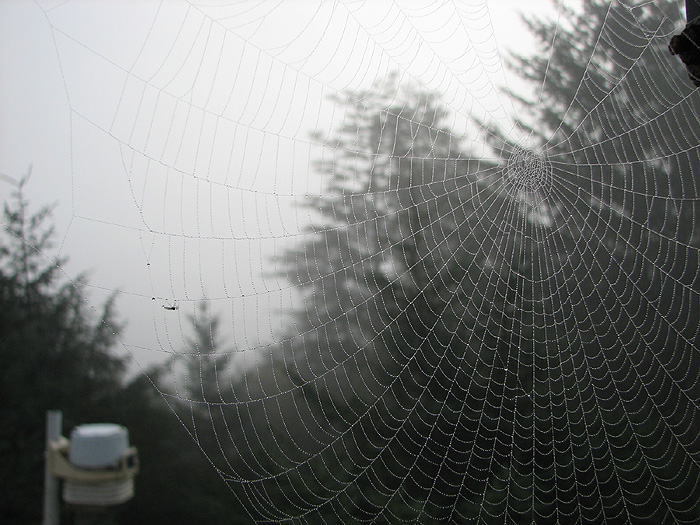 A Web Spinner's Work.