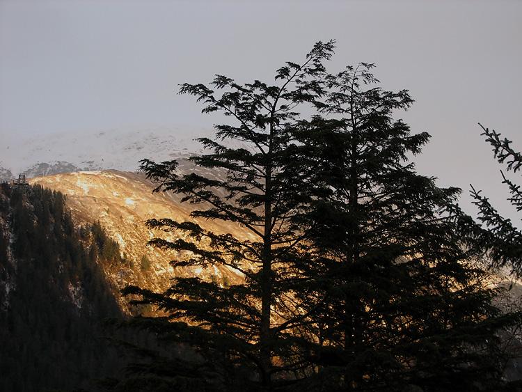 Mt. Roberts and Mountain Hemlocks.